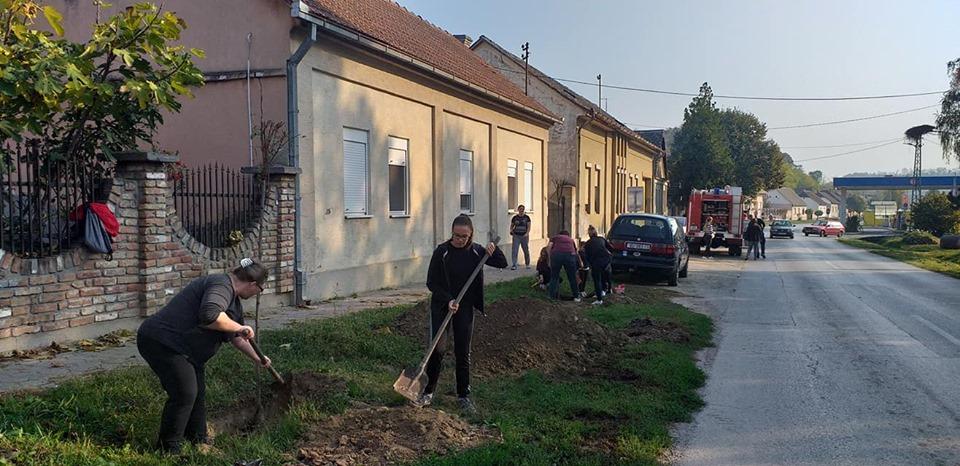 Kolektivna sadnja drveća u Iloku 2019.